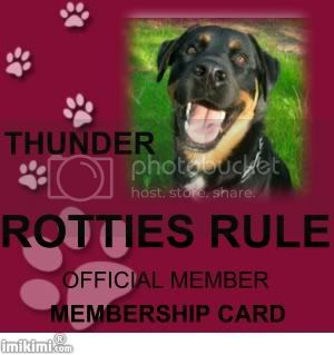 Rotties Rule Member Thunder
