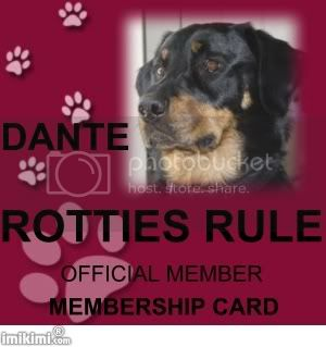 Rotties Rule Member Dante